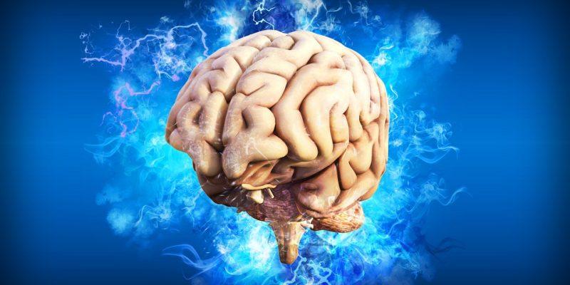 hersenstimulatie, darmen hersenen, brein, erik scherder