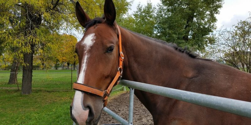 paardentherapie, alternatieve zorg, autisme